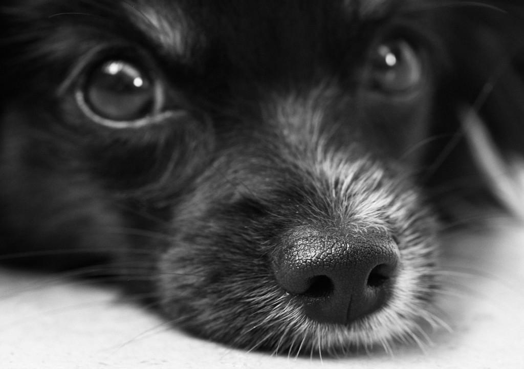 tu mascota tiene buen corazón