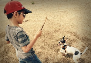 jugar con animales