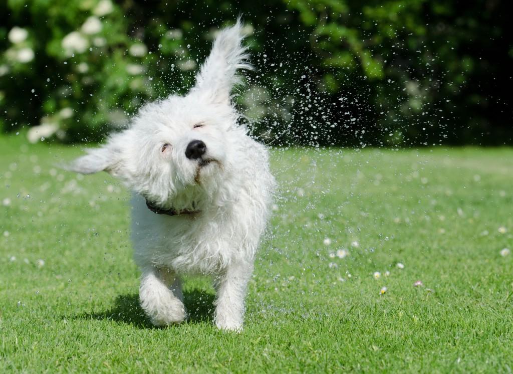 la higiene de nuestros perros