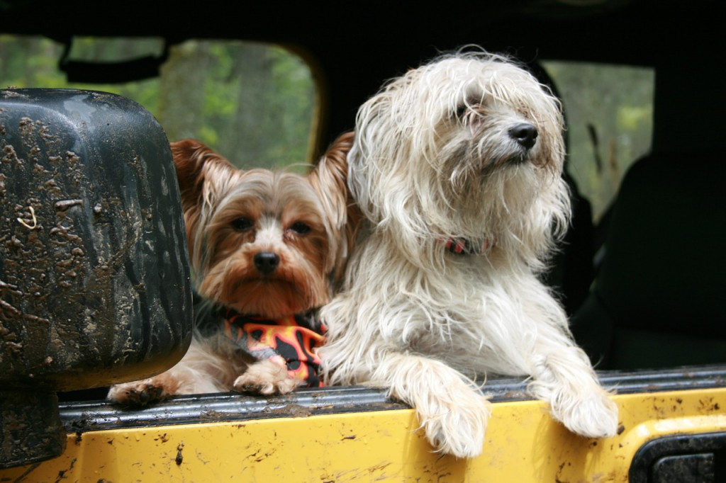 de viaje con nuestras mascotas